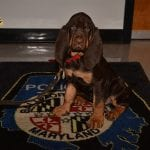 Baltimore County Police New Bloodhound