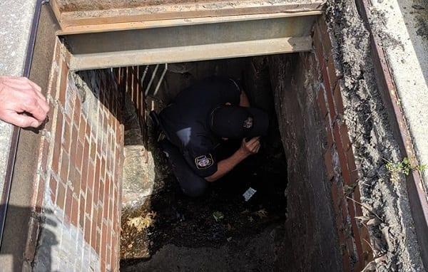 Police Rescue Ducks White Marsh 1