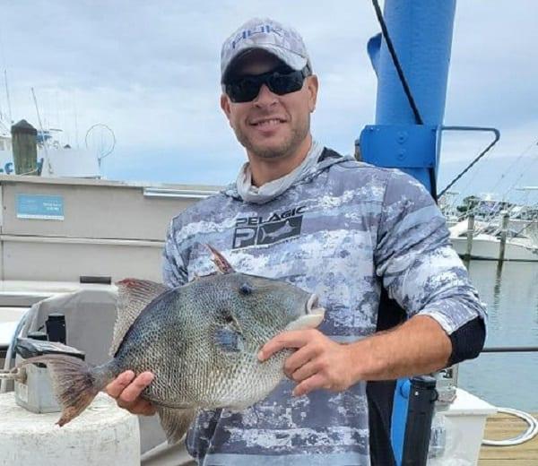 Logan Liddick Gray Triggerfish