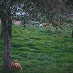 Green Lawn Trees