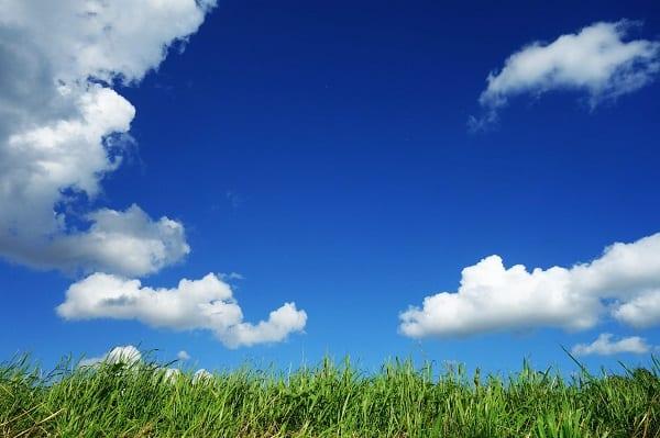 Blue Sky Grass