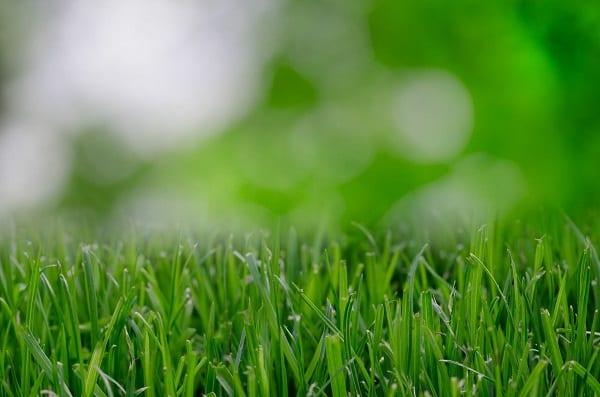 Lawn Grass Yard